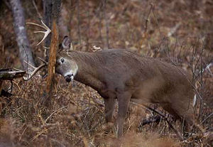 Texas Hunting Leases