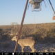 Season deer lease available