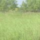 Frio county hunting lease