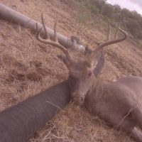 Menard Co Cull buck 2 day package opening weekend