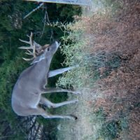Whitetail & Exotics, 3100 Acres, Uvalde County, game management, hog & predator hunting