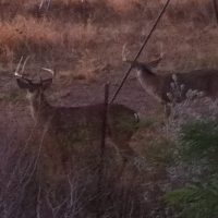 Great Bow Hunting Lease - Live Oak County - South Texas - On Lake