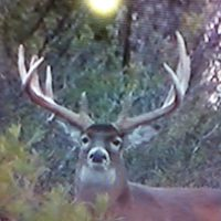 9000 ACRE LOW FENCE TROPHY LEASE