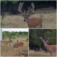 Trophy Whitetail Deer Hunting Lease